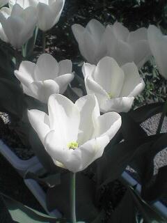 花が開いているのもあります