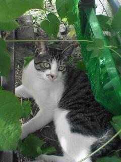 いつものノラ猫です。我が家の前庭にて