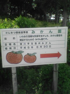 みかんの栽培もやってるようです