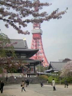 増上寺、桜と東京タワー